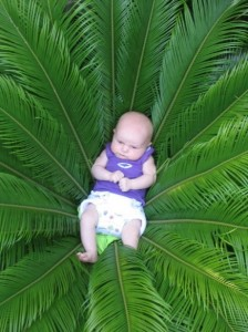 Tia In the cycad